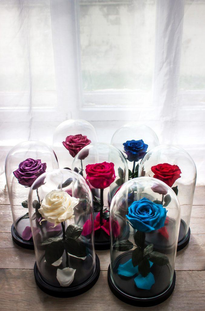 Rosa eterna online